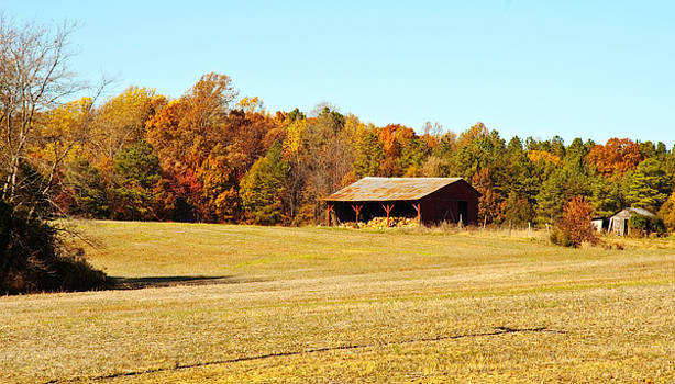 The Woodshed by Cindy Adams