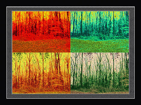 The World Of Trees by Debra Lynch