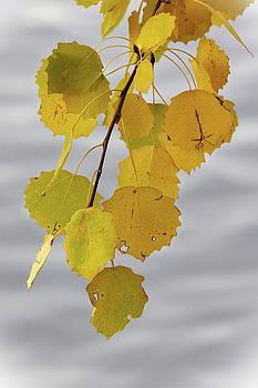 The Yellow Aspen by Jouko Lehto