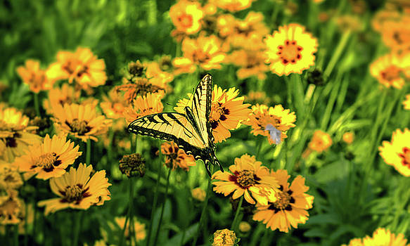 The yellow butterfly by Dale Jackson
