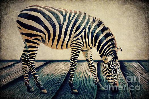 Angela Doelling AD DESIGN Photo and PhotoArt - The Zebra Portrait
