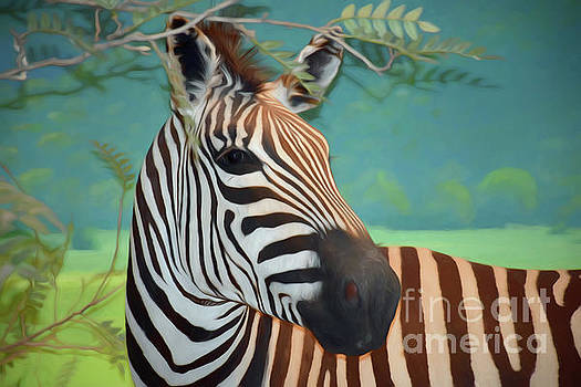The Zebra by Ray Shrewsberry