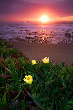 Thee Iceplants in the Pacific Coast by Adonis Villanueva