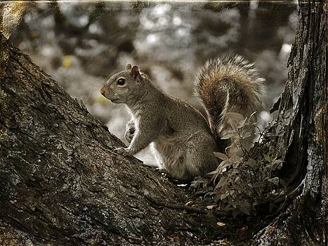 Then There Was Squirrel by Gothicrow Images