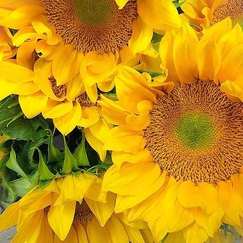 These Sunflowers Though...!! Hope by Erika L