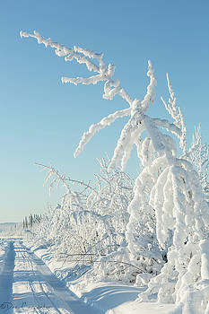 Thick Hoar Frost by Dee Carpenter