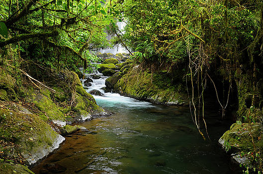 Reimar Gaertner - Thick tropical rainforest jungle and stream with waterfall at Po