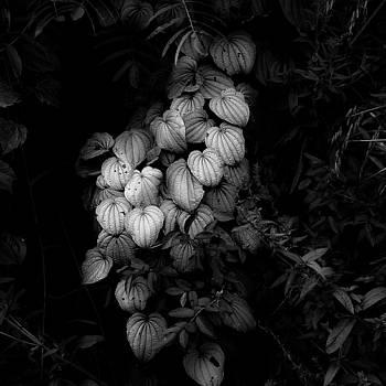 Thicket Details 003 by Noah Weiner