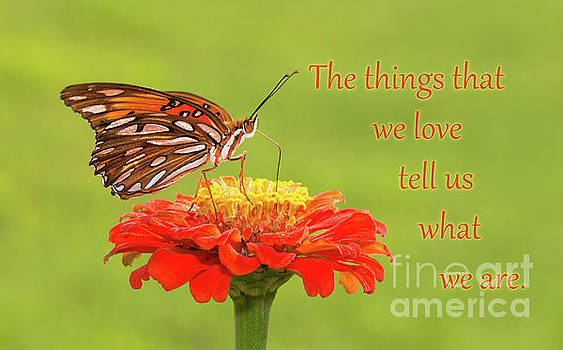 Things We Love by Sari ONeal
