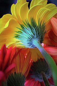 Think Spring by John Rivera