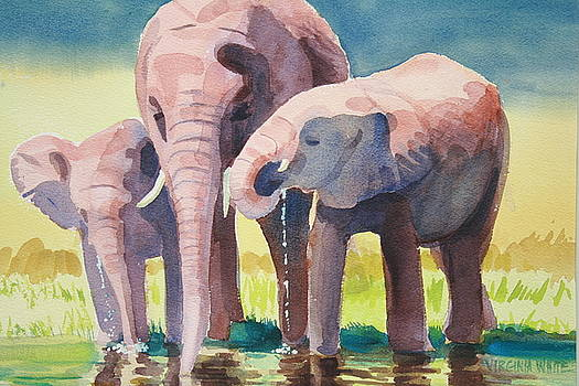 Thirsty Elephants  by Virginia White