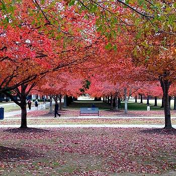 Beautiful Campus by Gabrielle Coleman
