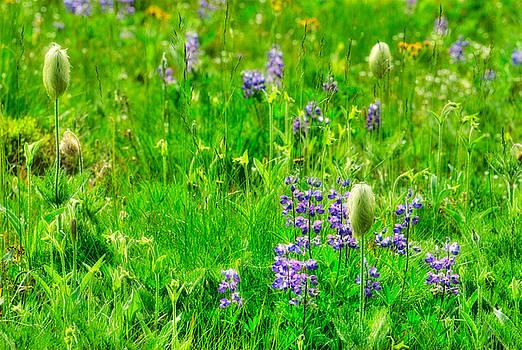 Paul W Sharpe Aka Wizard of Wonders - This is British Columbia 5 Alpine Meadow