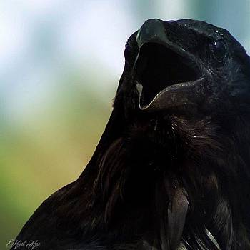 This Is Huginn, 34 Year Old Raven by Kerri Ann Crau
