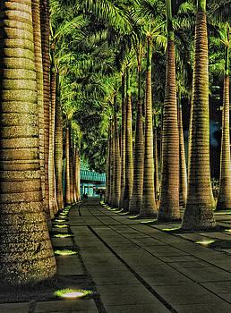 Paul W Sharpe Aka Wizard of Wonders - This is Singapore No. 20 - Palm Row