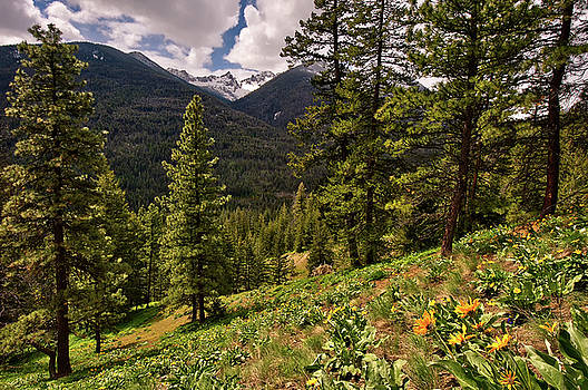 Paul W Sharpe Aka Wizard of Wonders - This is Washington State No.1 - Klipchuck