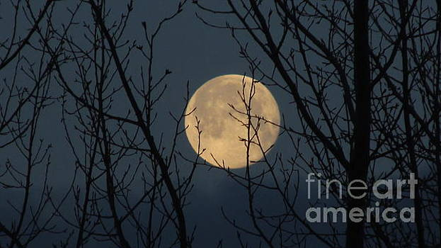 This Mornings Moon by Janice Westerberg