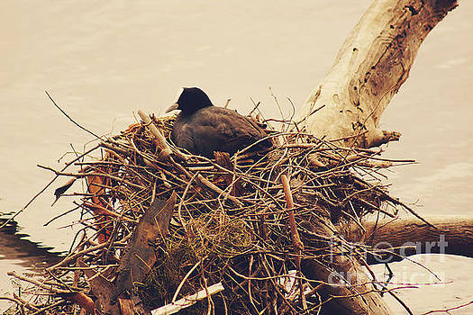 This Nest is Best by Cassandra Buckley