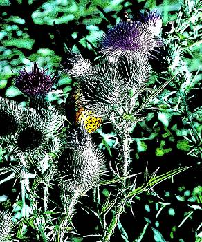 Thistle Butterfly and Bees by Cliff Wilson