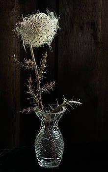Thistle in Crystal Vase by Pam Kaster