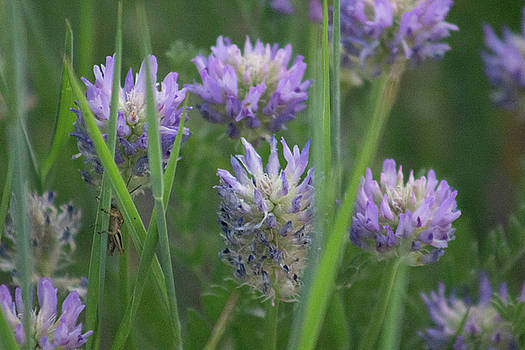 Thistle in the Grass by Jodi Vetter