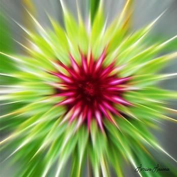 Thistle Starburst by Lorraine Louwerse
