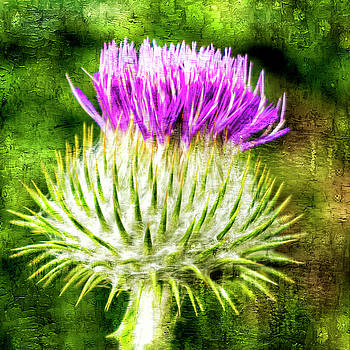 Thistle - The flower of Scotland by Paul Cullen