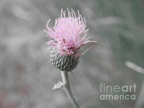 Thistle Wildflower by Ella Kaye Dickey