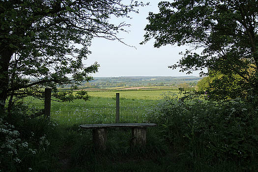 Thorncombe Woods - A Place To Think by Mike Finding