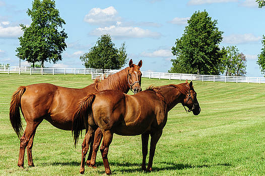 Thoroughbreds by Barry Fowler