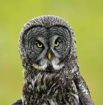 Those Eyes by Doug Lloyd