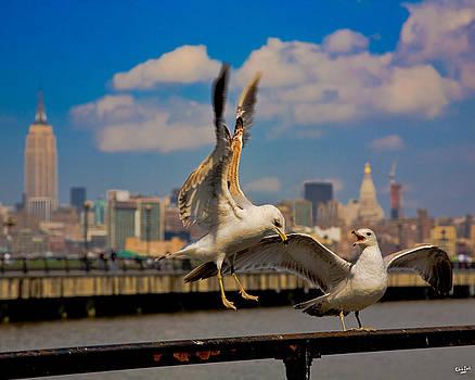 Chris Lord - Those Jersey Gulls