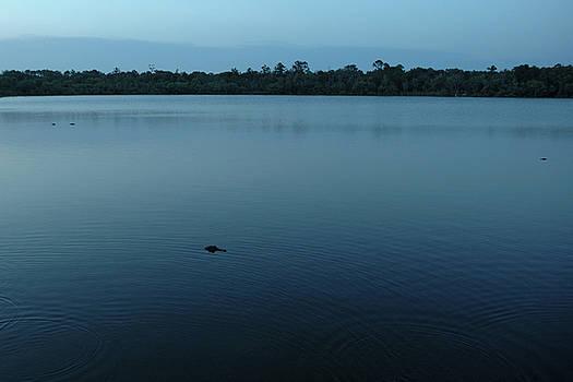Kathi Shotwell - Three Alligators