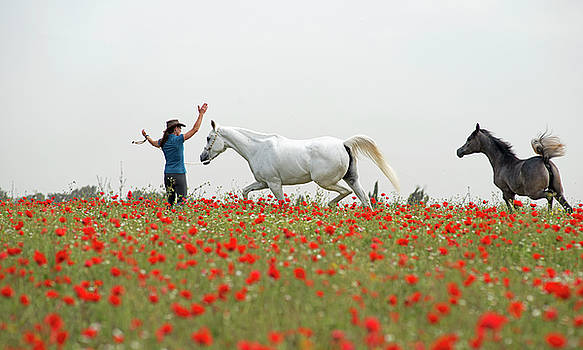 Three at the poppies' field by Dubi Roman