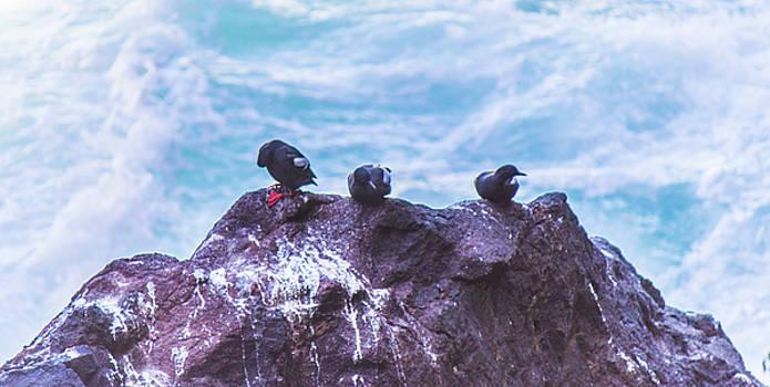 Three Birds by Jonny D