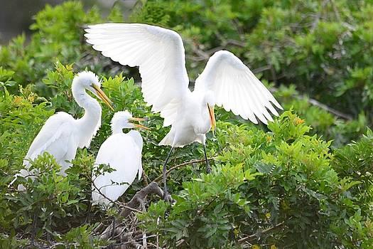 Patricia Twardzik - Three Birds of a Feather Flock Together