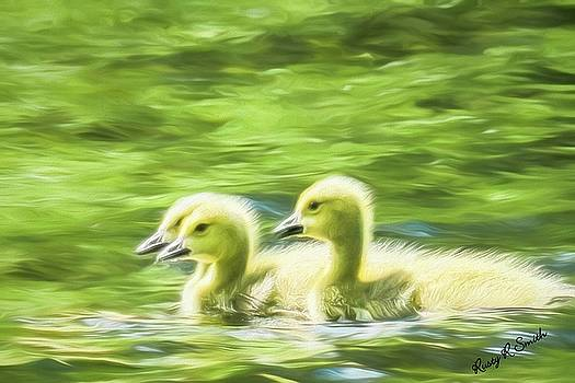 Three Canada geese fluffy yellow goselings. by Rusty R Smith