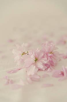 Three Cherry Blossom by David Ridley