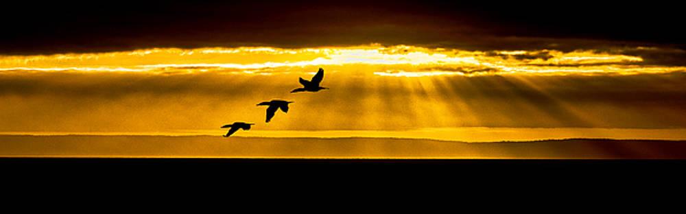 Three Cormorant Sunrise Panorama by Marty Saccone