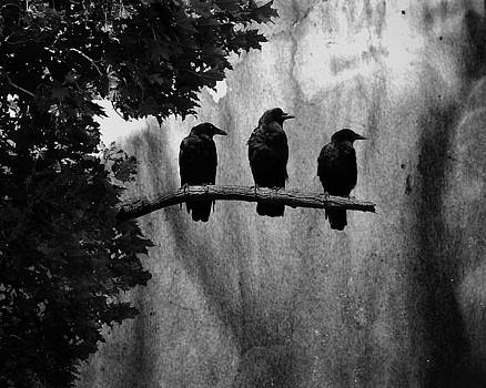 Three Crows Branch Out by Gothicrow Images
