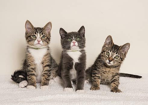 Three Cuties by Janis Knight
