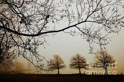Three Cypress in the Mist by Iris Greenwell