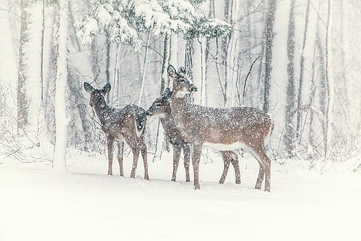 Karol Livote - Three Deer Come Calling