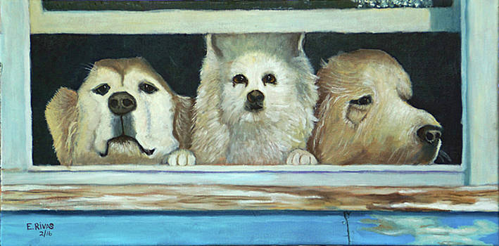 Three Dogs by Esther Rivas