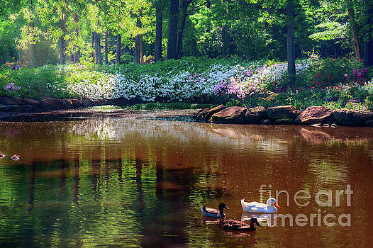 Three Ducks at the Azalea Pond by Tamyra Ayles