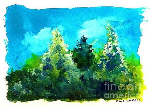 Three Evergreens by David Neace