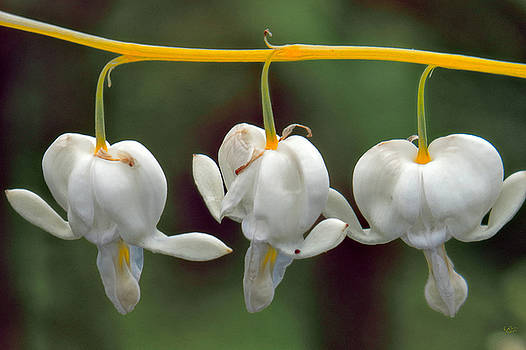 Three for Spring by Rick Lawler