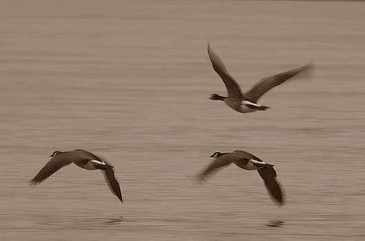 Randy J Heath - Three Geese