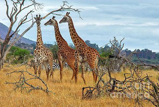 Robert Abramson - Three Giraffes