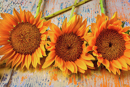Three Graphic Sunflowers by Garry Gay